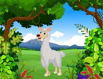 Cute lama cartoon with forest landscape background Royalty Free Stock Photography