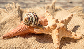 Cute land snail. Summer is the marine Souvenirs Royalty Free Stock Photos
