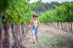 Cute laughing boy, running in a beautiful summer vine yard Royalty Free Stock Photography