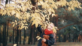 Cute, laughing, funny cheerful little girl with teddy bear shakes branch of a tree and yellow autumn leaves fall from it. Funny, laughing, cheerful beautiful stock video