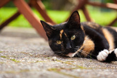 Cute lazy cat laying on rough concrete Stock Photography
