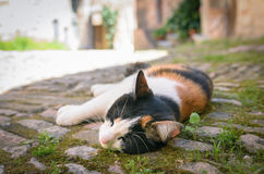 Cute lazy cat sleeping Royalty Free Stock Images