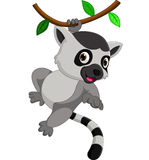 Cute lemur cartoon. Illustration of cute lemur cartoon royalty free illustration