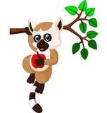 Cute lemur cartoon. Illustration of cute lemur cartoon vector illustration