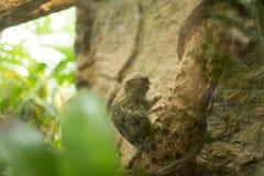 Cute lemur on a tree. Small, furry lemur on a jungle tree in a zoo Stock Image