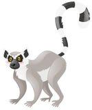 Cute lemur on white background. Illustration royalty free illustration