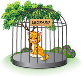 Cute leopard in a cage Royalty Free Stock Image