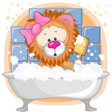 Cute Lion Stock Images