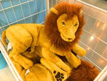 Cute Lion Doll. Cute Lion Doll. Cute Lion Doll .Cute Lion Doll.Cute Lion Doll.Cute Lion Doll stock images
