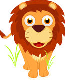 Cute Lion Standing Royalty Free Stock Photography