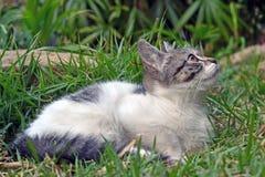 Cute litle kitten lying on the grass looking. Foward stock photography