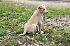 Cute littel dog. Photo of a cute doggy Royalty Free Stock Photo