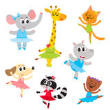 Cute little animal characters, ballet dancers in pointed shoes and tutu skirts Stock Images