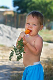 Cute little baby boy eating fresh carrot. outdoors Royalty Free Stock Image