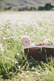 Cute little baby-boy sitting in a brown basket with chamomiles in a chamomile field Royalty Free Stock Photos