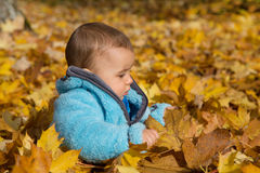 Cute little baby boy sitting in the maple leaves. Royalty Free Stock Images