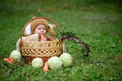 Cute little baby boy in suit of rabbit sitting on the grass in basket with cabbage and carrot. Nature park royalty free stock photos
