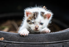 Cute Little Baby Cat royalty free stock image