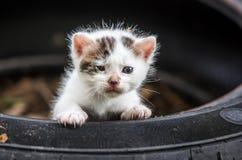 Cute Little Baby Cat stock photos