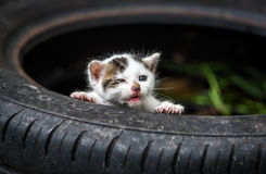 Cute Little Baby Cat royalty free stock images