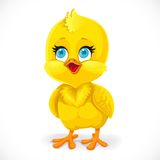 Cute little baby chick isolated on a white Royalty Free Stock Images