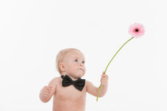Cute little baby gentleman giving a beautiful flower. Royalty Free Stock Photo