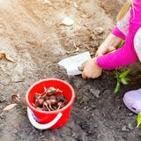 Cute little baby girl planting onion bulb seedlings. Little child gardener concept. Spring outdoor children activities.  royalty free stock images