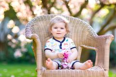 Cute little baby girl sitting on big chair in garden. Beautiful happy smiling toddler with blooming pink magnolia tree. On background. Healthy child enjoying royalty free stock image