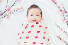 Cute little baby lies on a white cloth and wrapped in quilt, Looking camera. on white background. Cute little baby lies on a white cloth and wrapped in quilt Royalty Free Stock Photography