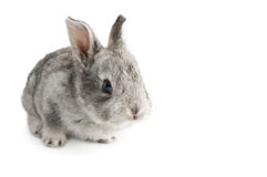 Cute little baby rabbit on white background, isolated Stock Photography