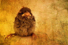 Cute little bird Royalty Free Stock Photos