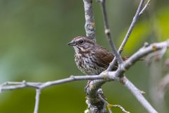 Cute little bird on a branch.  Royalty Free Stock Photos