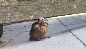Cute little bird. Cute little feathered friend taking a rest stock photo