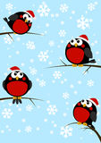 Cute little birds on winter background Royalty Free Stock Photo