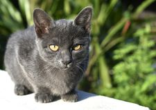 Cute little black cat sits on a wall. royalty free stock photography