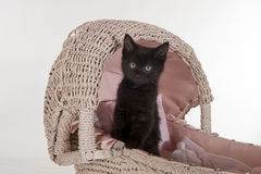 Cute little black kitten in baby carriage Stock Image