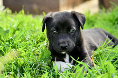 Cute little black puppy Stock Photos
