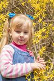 Cute little blonde girl with two ponytails near the bush with br. Ight yellow flowers in the city park on a spring sunny day Stock Photography