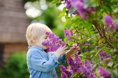 Cute little blonde hair boy enjoy blooming lilac in the domestic garden in warm day royalty free stock image