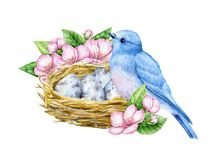 Cute little blue bird with nest and blue eggs. Watercolor illustration. Cute animals and birds. Spring symbol. Happy Easter. Blue luck bird English style. Cute Royalty Free Stock Images
