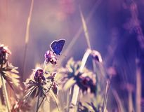 Cute little blue butterfly sitting on a delicate and beautiful f. Airy purple meadow stock photos