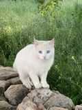 Cute little blue eyes cat sitting on the stone royalty free stock images
