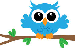 A cute little blue owl Stock Photo