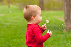 Cute little boy blowing on dandelion. In the park on beautiful spring day Stock Photo