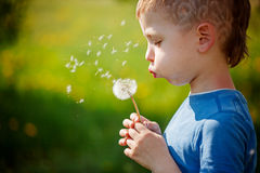 Cute little boy blowing dandelion in spring garden. Springtime.  Royalty Free Stock Images