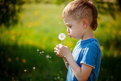 Cute little boy blowing dandelion in spring garden. Springtime.  Stock Image