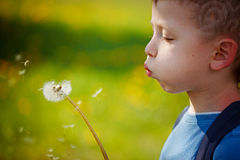 Cute little boy blowing dandelion in spring garden. Springtime. Stock Photo
