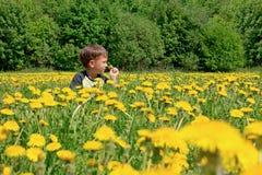 Cute little boy blowing on dandelions on meadow Stock Images