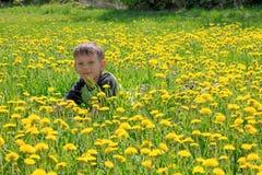 Cute little boy blowing on dandelions on meadow Stock Photography