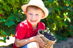 Cute little boy at boysenberry u-pick. Smiling little boy with a basket of boysenberries royalty free stock photos